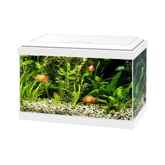 Aquarium aqua 20 led Wit