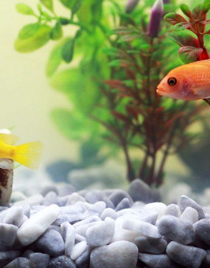 Aquarium toebehoren