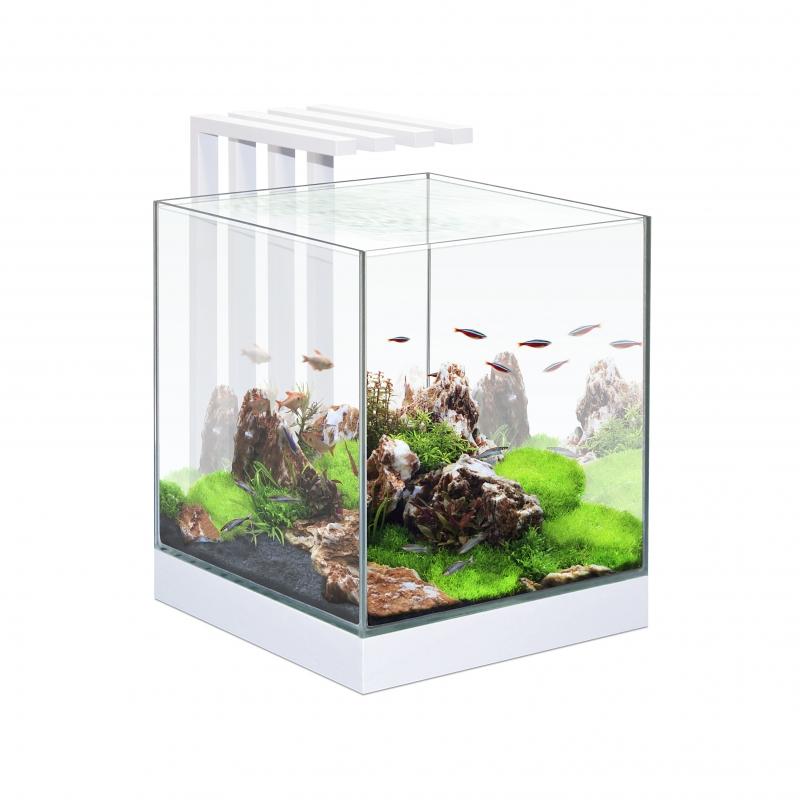 Ciano aquarium nexus pure 25 LED