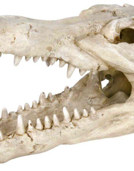 Krokodil schedel